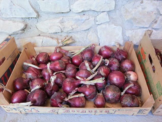 Cebollas ecológicas rojas