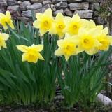 Primavera y depuración