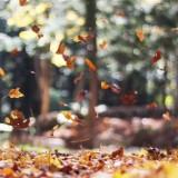 ¿Qué puedes hacer para vivir un otoño dulce?