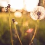 Descubre qué pasa con tus sueños y tu creatividad en primavera